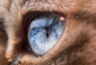 fascinantes-fotografias-de-olhos-de-gatos-por-andrew-marttila-thumb2