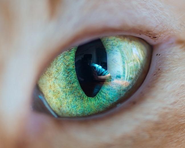 fascinantes-fotografias-de-olhos-de-gatos-por-andrew-marttila (1)