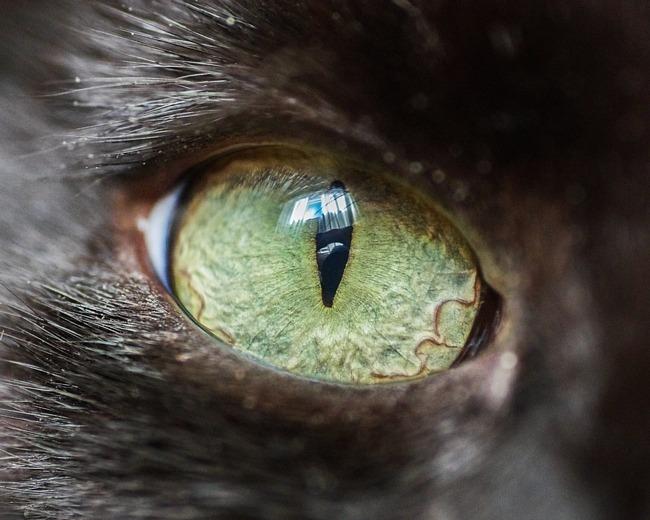 fascinantes-fotografias-de-olhos-de-gatos-por-andrew-marttila (10)