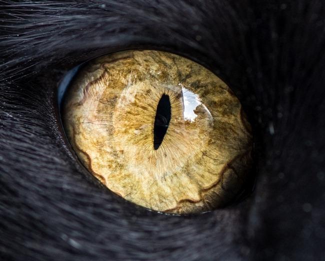 fascinantes-fotografias-de-olhos-de-gatos-por-andrew-marttila (11)