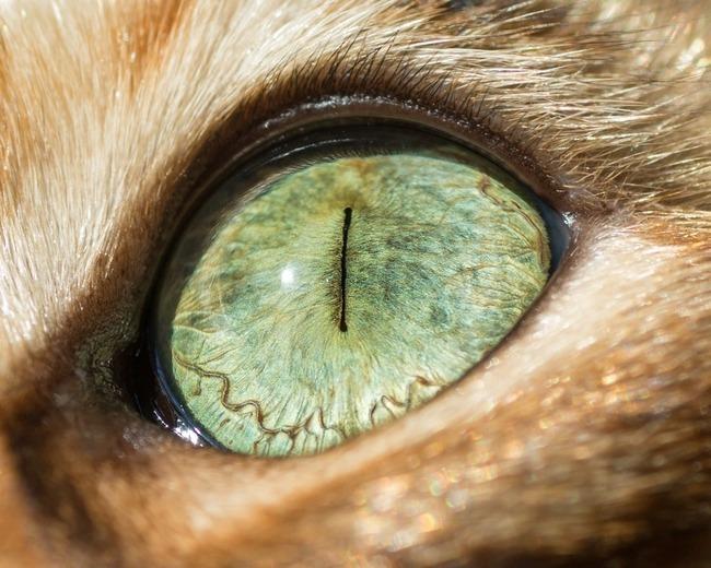 fascinantes-fotografias-de-olhos-de-gatos-por-andrew-marttila (12)