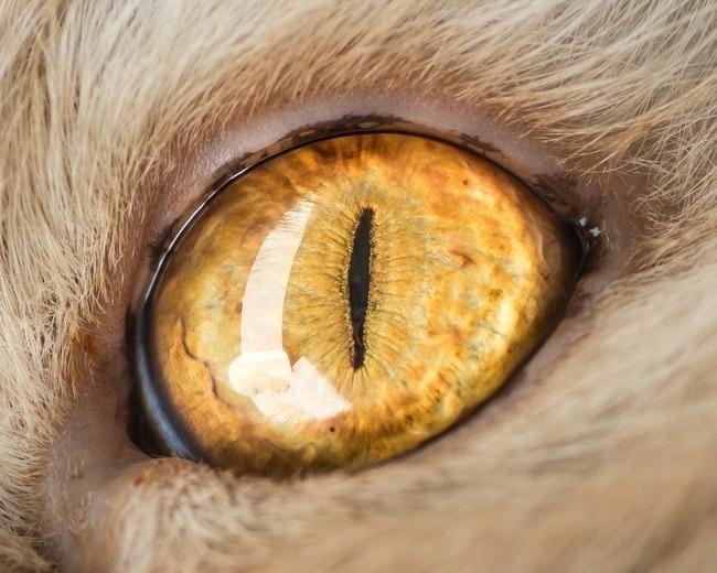 fascinantes-fotografias-de-olhos-de-gatos-por-andrew-marttila (14)