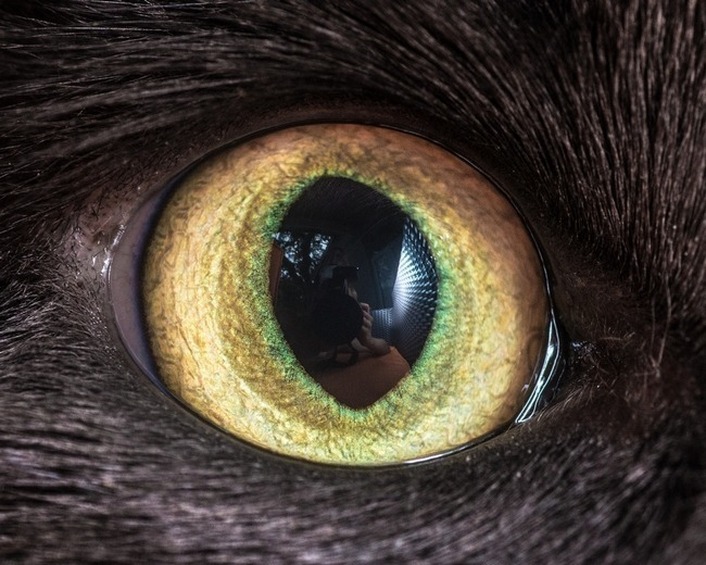 fascinantes-fotografias-de-olhos-de-gatos-por-andrew-marttila (15)