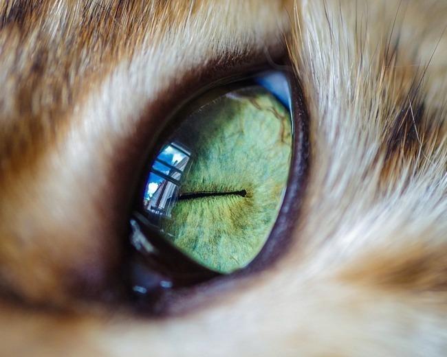 fascinantes-fotografias-de-olhos-de-gatos-por-andrew-marttila (18)