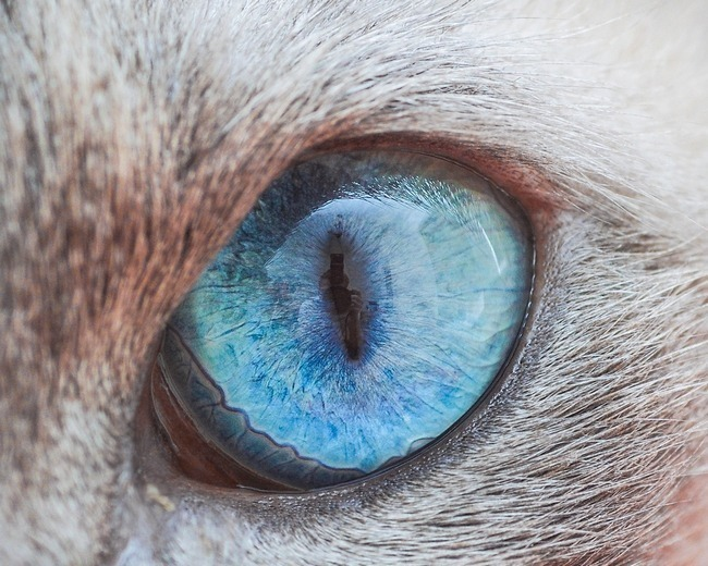 fascinantes-fotografias-de-olhos-de-gatos-por-andrew-marttila (4)