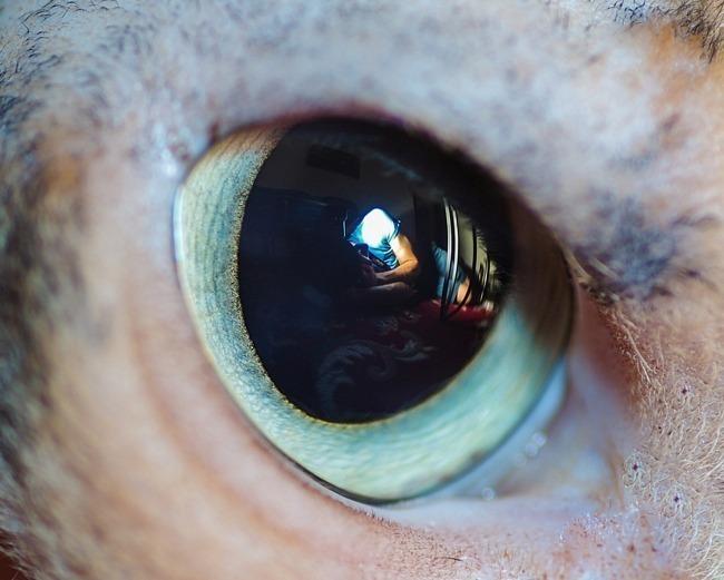 fascinantes-fotografias-de-olhos-de-gatos-por-andrew-marttila (5)