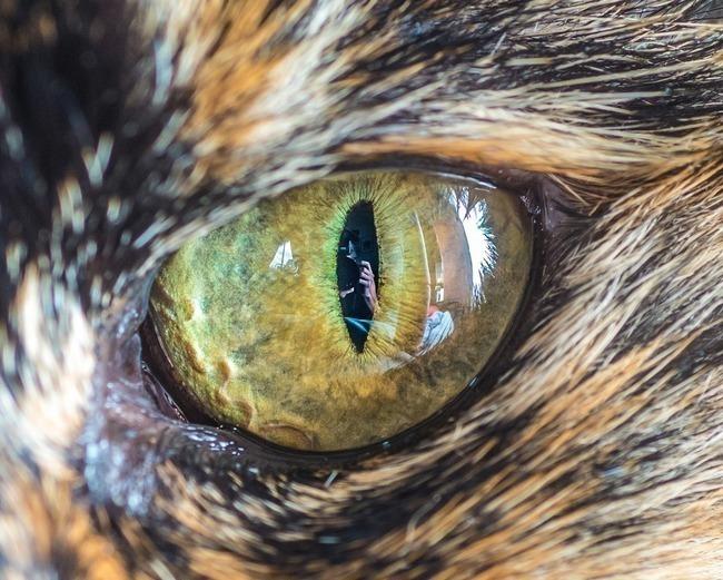 fascinantes-fotografias-de-olhos-de-gatos-por-andrew-marttila (6)