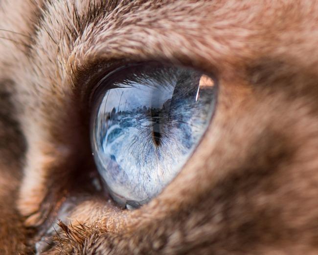 fascinantes-fotografias-de-olhos-de-gatos-por-andrew-marttila (7)