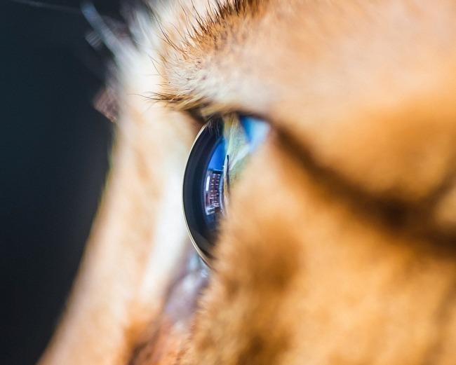 fascinantes-fotografias-de-olhos-de-gatos-por-andrew-marttila (8)