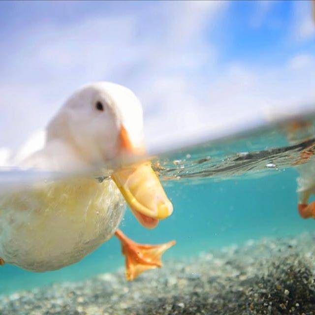 Lindas E Criativas Fotografias Subaquáticas De Lisa Michele Burns