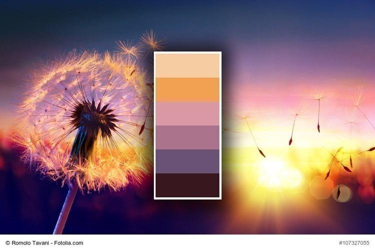 Como criar incríveis paletas de cores à partir de fotos